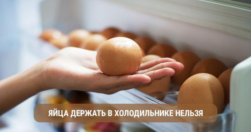 Как правильно хранить куриные яйца